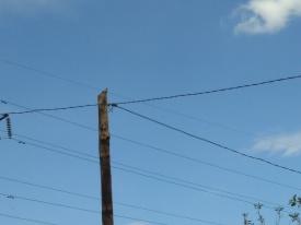 """Кукушка на проводах 2"""
